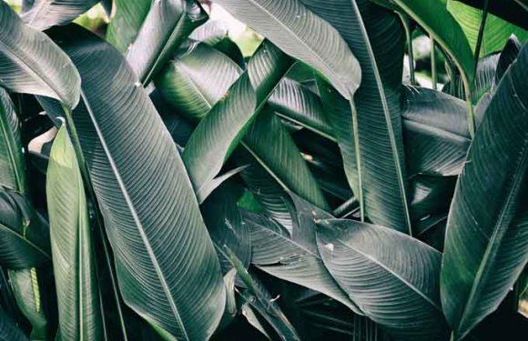 Искусственные листья могут поглощать СО2 во много раз эффективнее настоящих